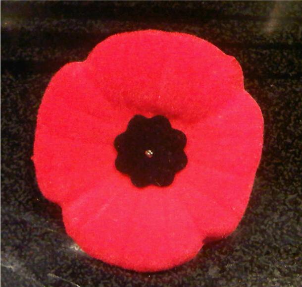 remembrance day, poppy