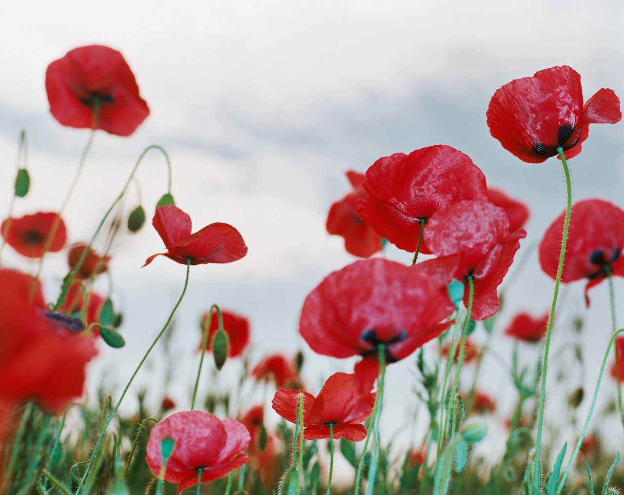 Remembrance day poems amotherworld remembrance day poems mightylinksfo