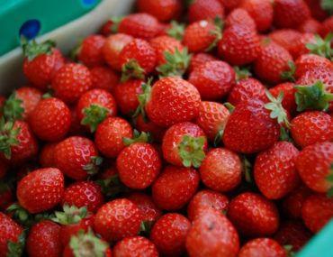 Love strawberries? Strawberry Festivals in Ontario