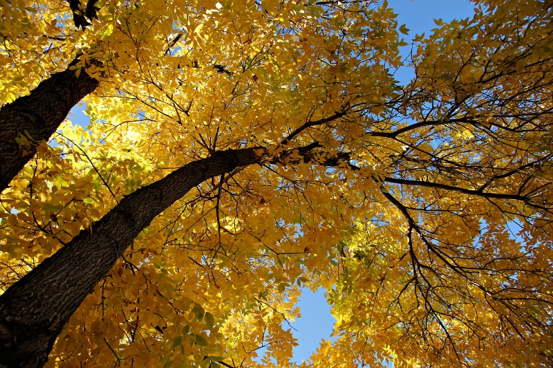 Happy First Day of Fall Quotes – amotherworld