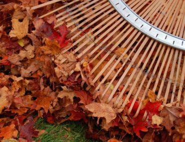 "Fall Yard Work ""Re-Leaf"" Raking Tips"