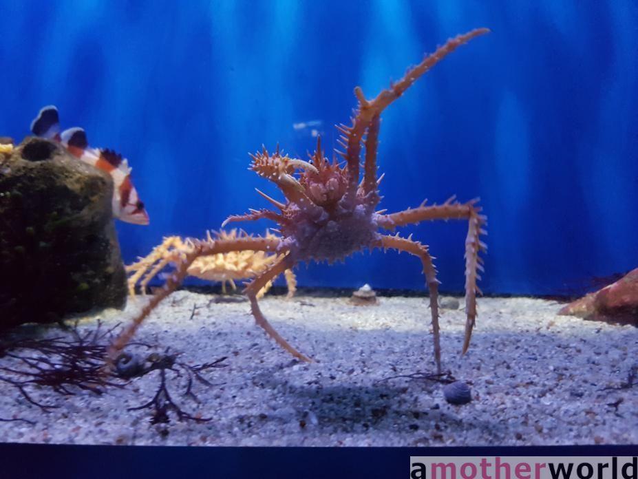 Birch Aquarium at Scripps San Diego - crab