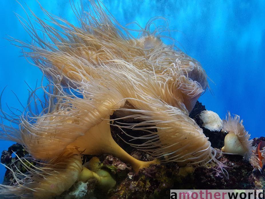 San Diego fun for the family - Birch Aquarium at Scripps