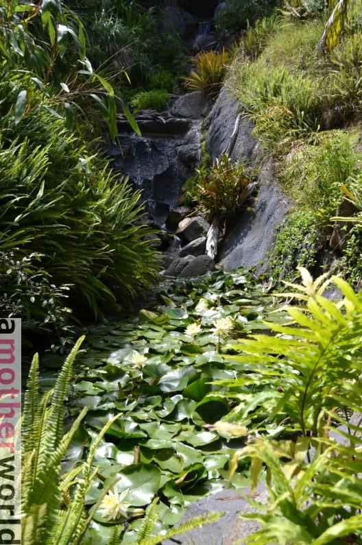Top Vacation Spot: Fun Family Vibe in San Diego - Botanic Garden waterfall