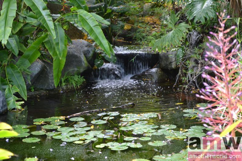 San Diego is a Fun Destination for the Family - San Diego Botanic Garden