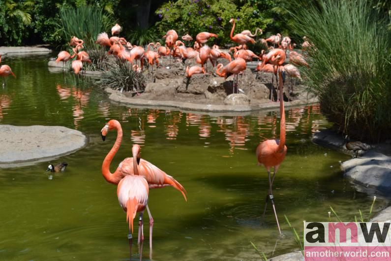 Top Vacation Spot: Fun Family Vibe in San Diego - San Diego Zoo