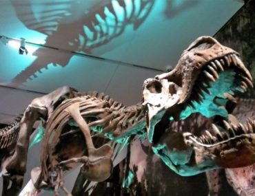 A Family Membership at the Royal Ontario Museum is So Worth It!
